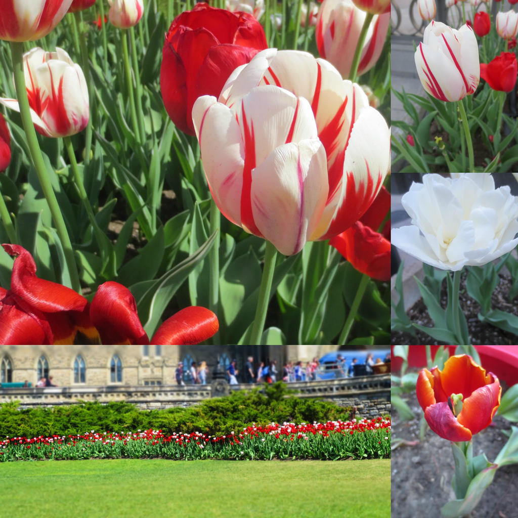 Ottawa Flowers by SymmetryIsKeyDTK