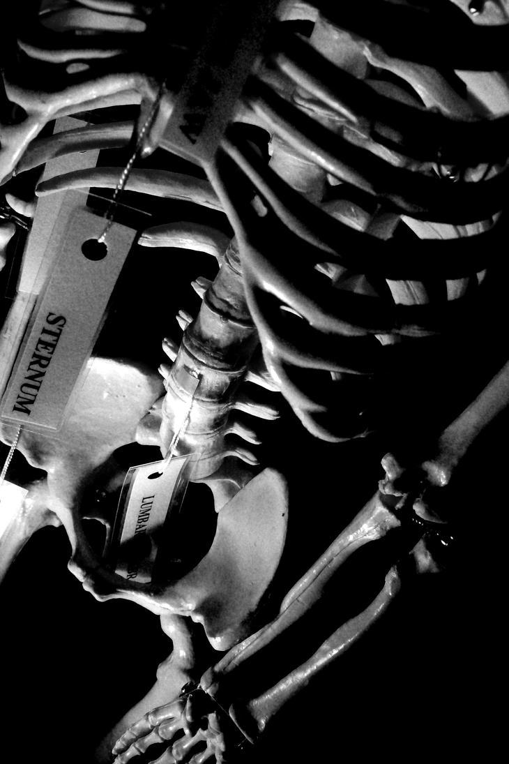 skeleton by pixielixa