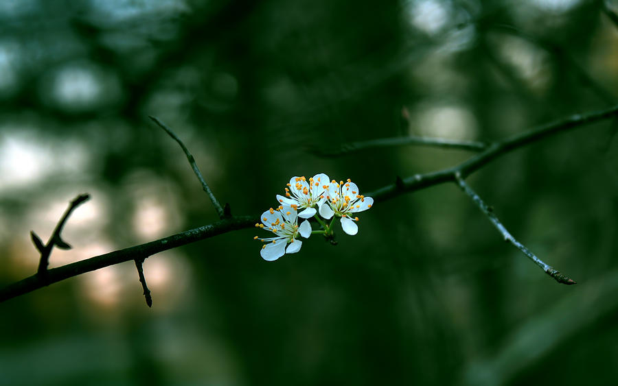 I believe in spring by RyoThorn