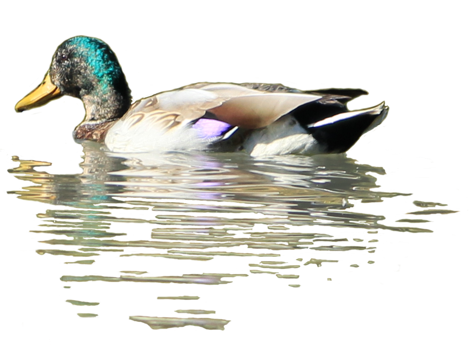 bird wallpaper download for mobile