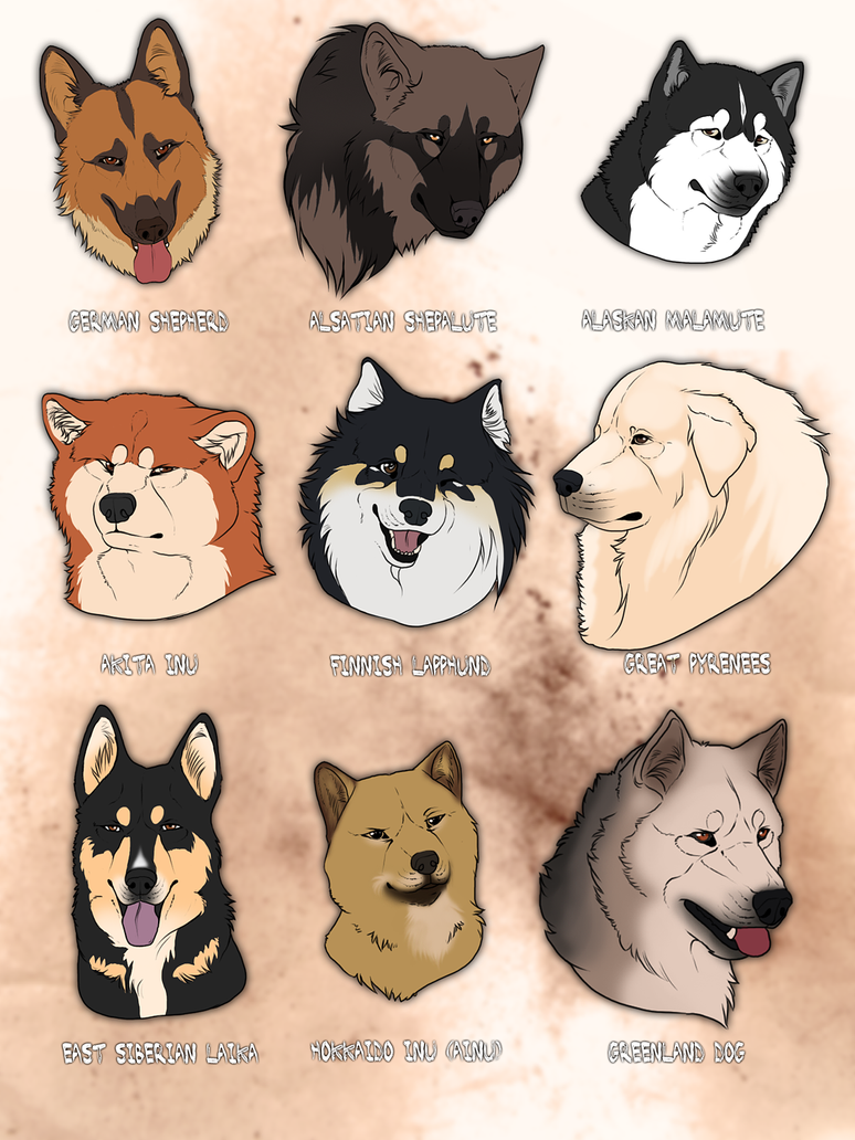 Which Dog Breed Is Closest Related To The Wolf