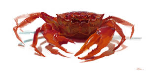Big Red Crab