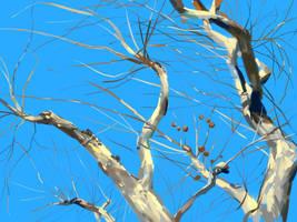 Phoenix Tree by zhuzhu