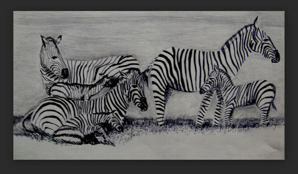 Zebras by philippeL