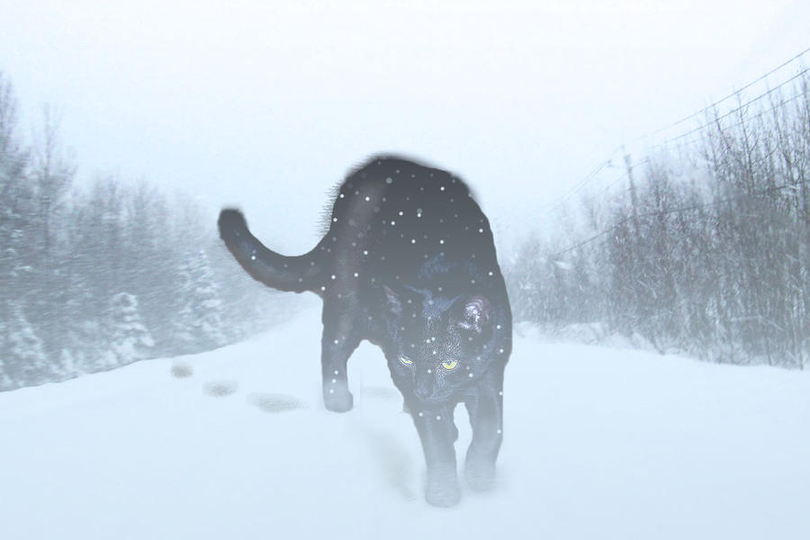 Snow Panther by philippeL