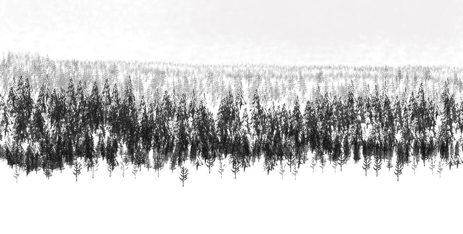 Boreal Forest by philippeL