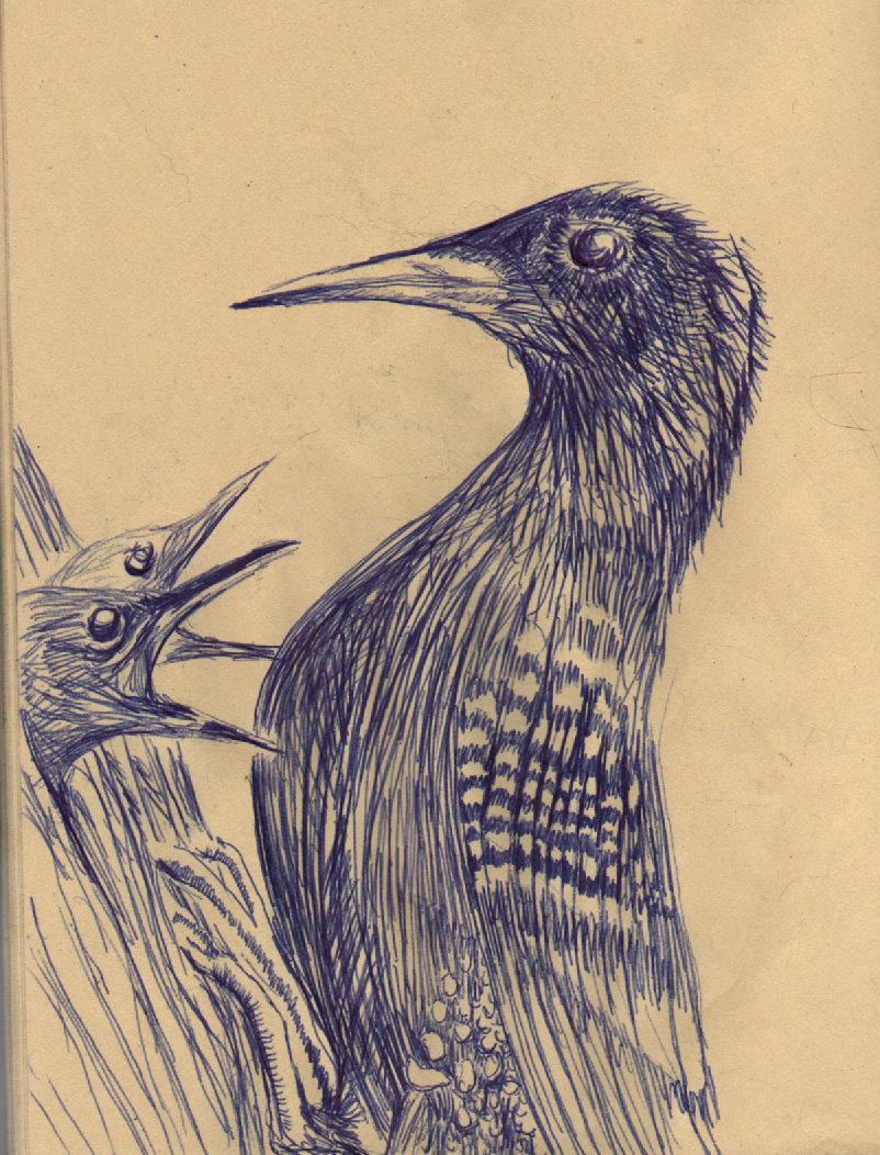 Birds in Ballpoint by philippeL