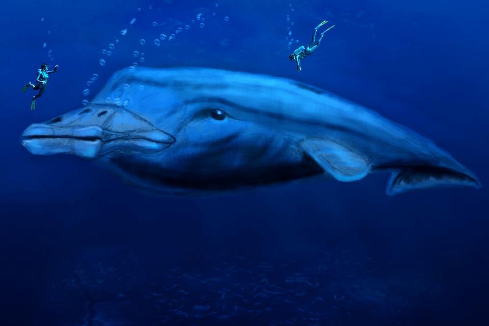 Huge Placid Marine Beast by philippeL