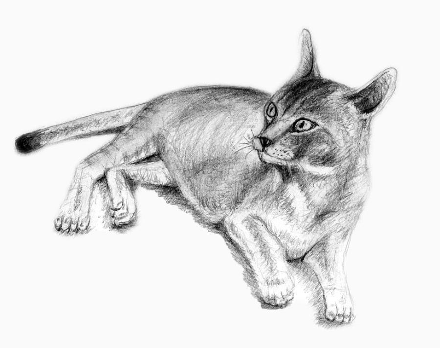 Abyssinian Cat by philippeL