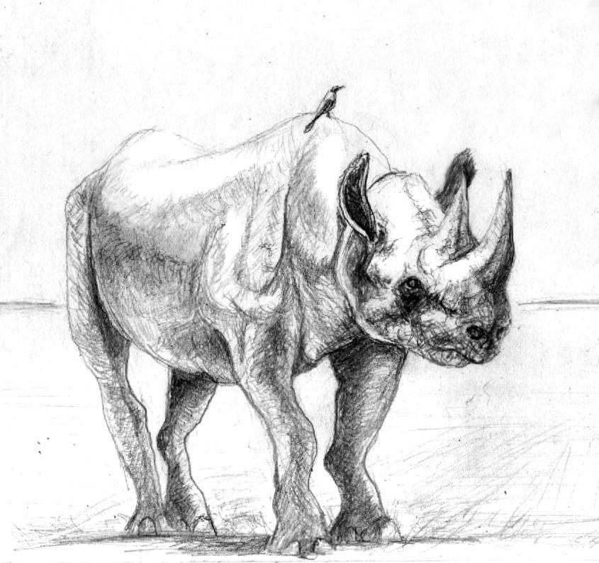 Rhino by philippeL