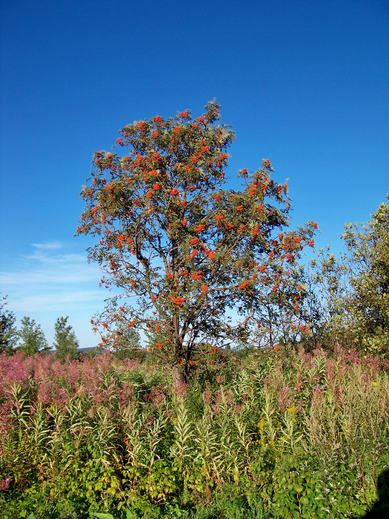 Colored Tree by philippeL