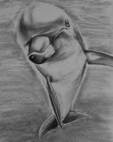 Dolphin - Draw-along Aug 2013 by philippeL