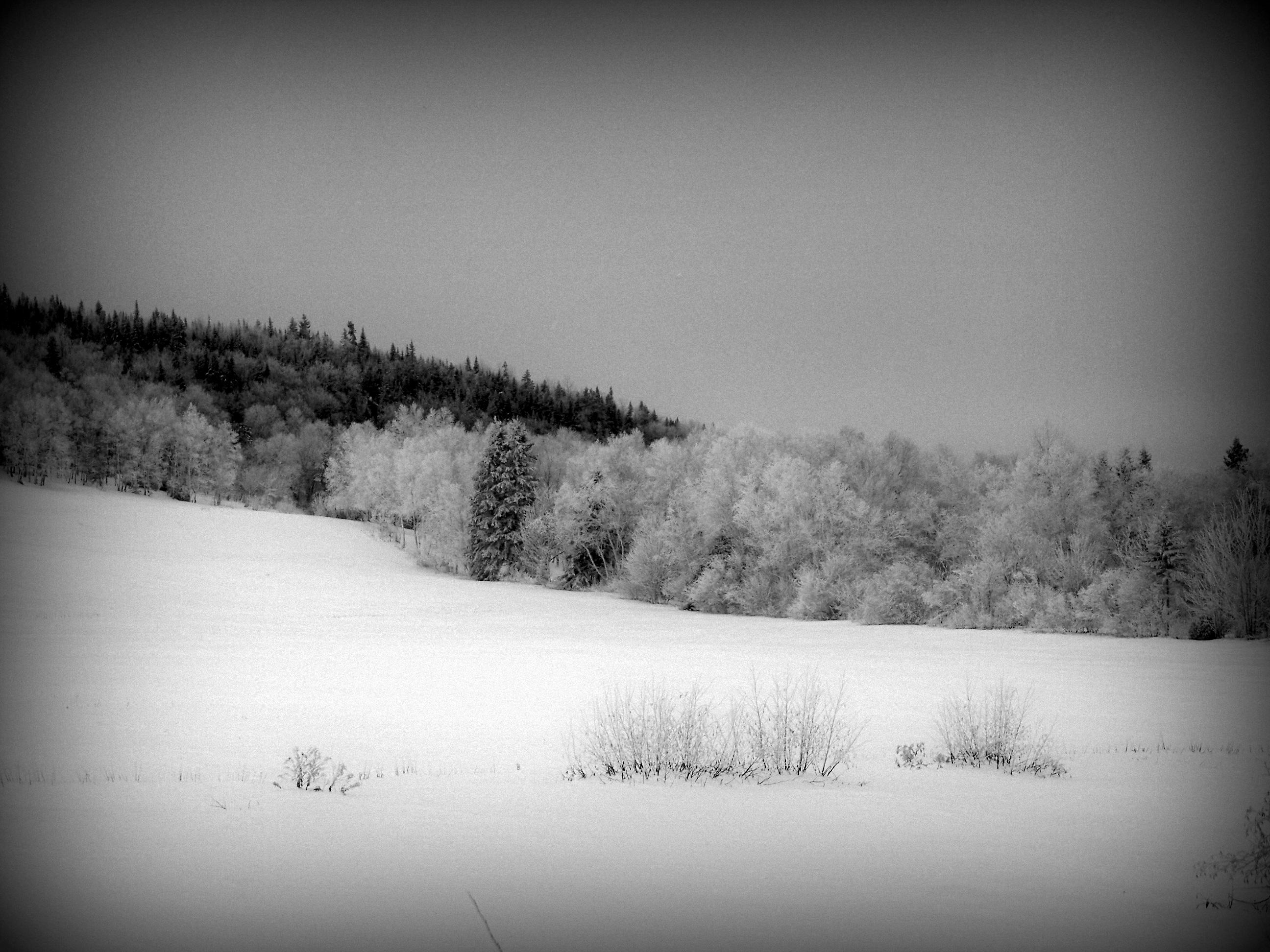 Winter Dream by philippeL