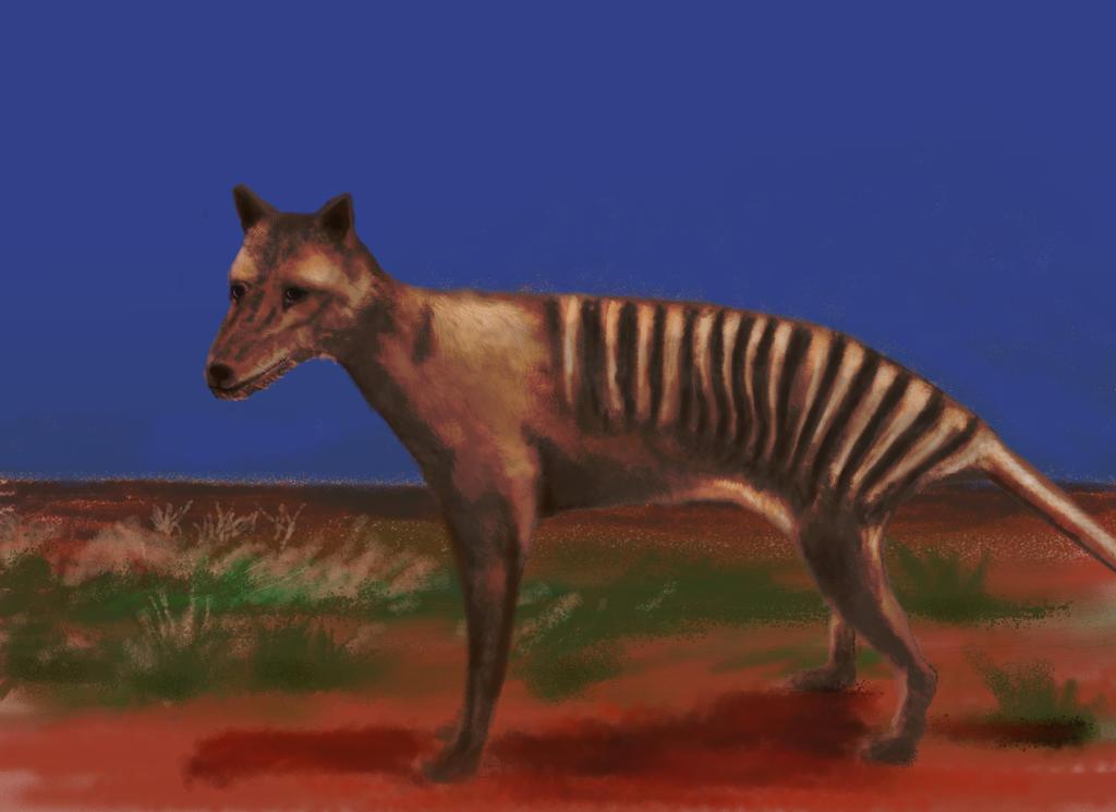The Last Thylacine by philippeL
