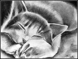 Sleepy Kitty by philippeL