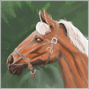 Horse Head (ArtRage) by philippeL