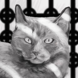 Non Smiling Silvery Cat by philippeL