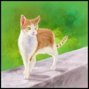 Kitten on a Wall