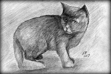 Random Cat Sketch by philippeL
