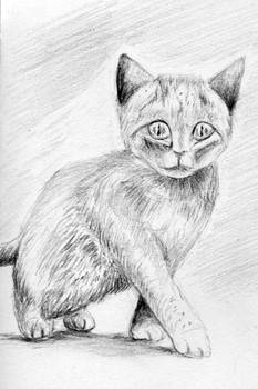 Amazed Kitty