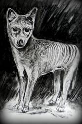 Thylacine - Extinct Tasmanian Tiger by philippeL