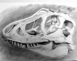 T-Rex Skull by philippeL