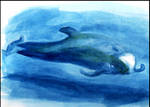 Pilot Whale - Watercolor by philippeL