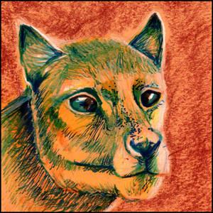 Thylacine - sanguine and felt pens