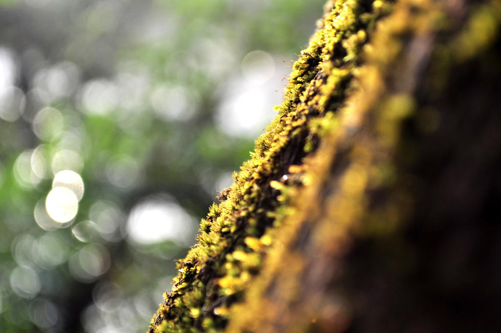 Green Bark by Gigacore