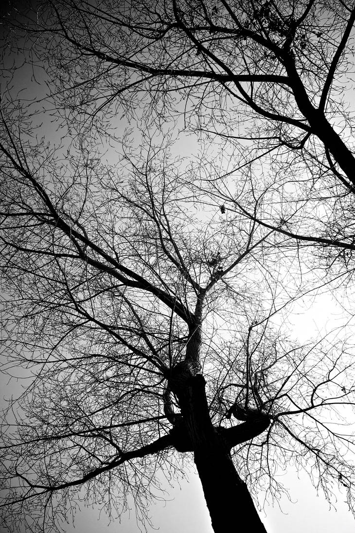 Like my veins by SantoEc