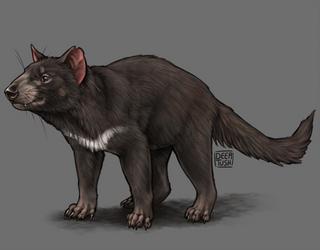 Tasmanian Devil by Deertush