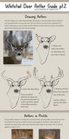 Whitetail Antler Guide pt.2