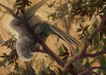 C: Greater Vasa Parrot