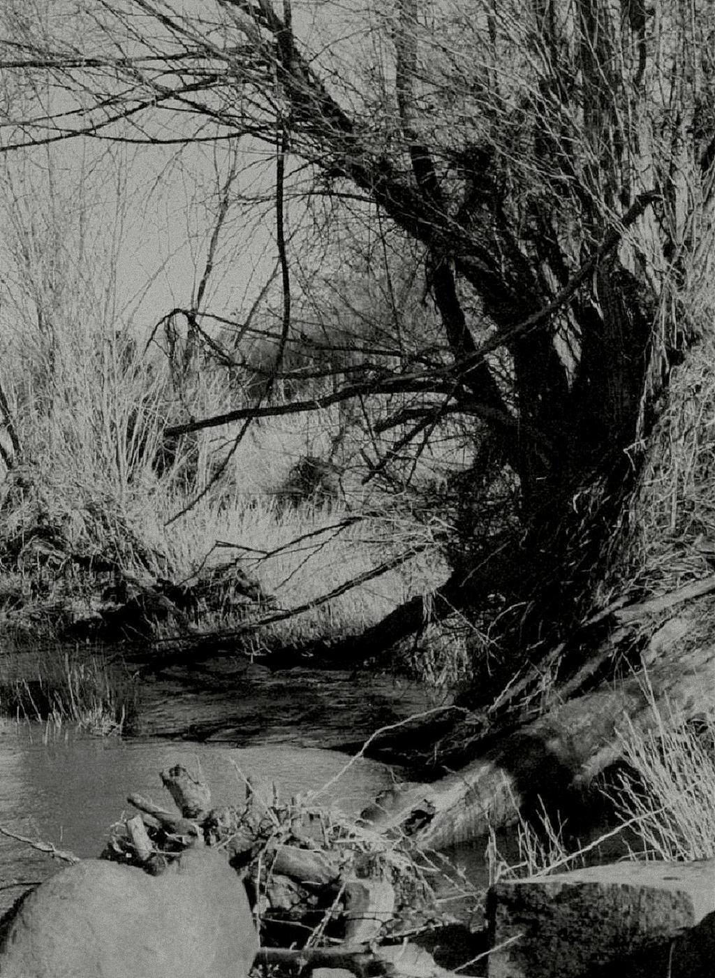 Into the dusky twillight... by thewolfcreek
