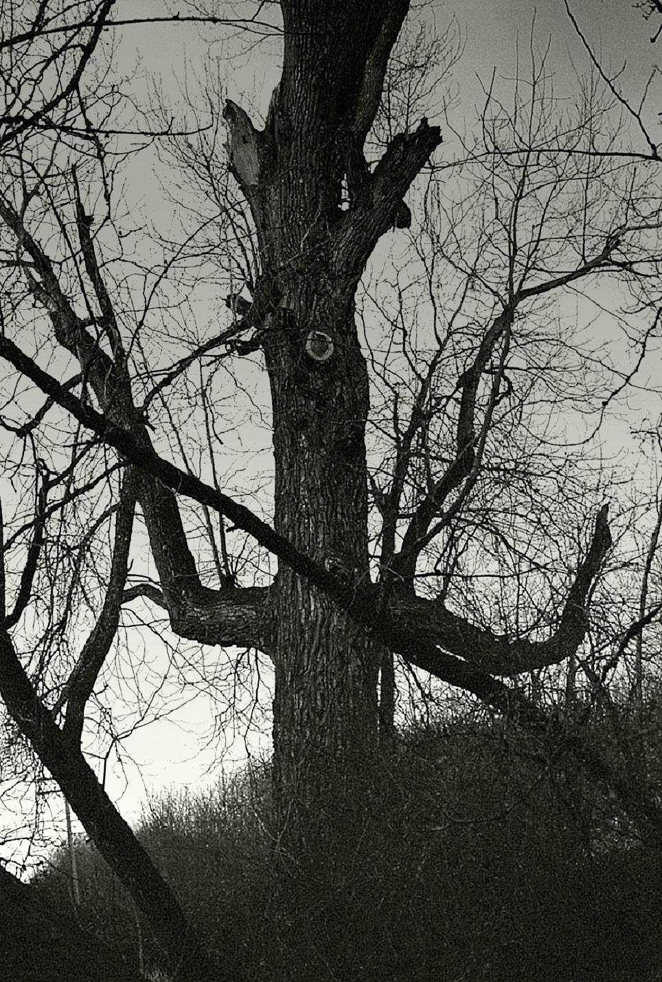 Something wicked... by thewolfcreek