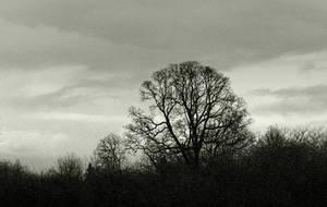 A dark silhouette... by thewolfcreek