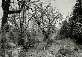 The wilderness... by thewolfcreek