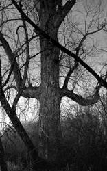 A dark totem... by thewolfcreek