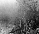 The mist... by thewolfcreek