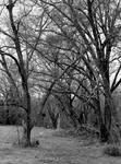 A darker path... by thewolfcreek