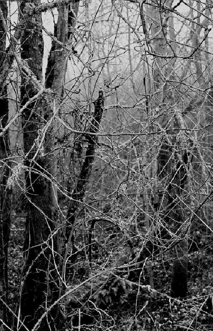 Embrace the fog... by thewolfcreek