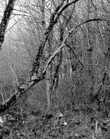 Of barren woods and thickets... by thewolfcreek