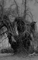 The dark sentinel... by thewolfcreek