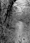 Sweet water... by thewolfcreek