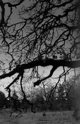 Strange days... by thewolfcreek
