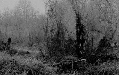 Dark unwelcome woods... by thewolfcreek