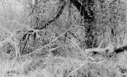 Enchanted woods... by thewolfcreek
