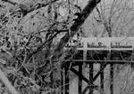 The crossing... by thewolfcreek