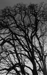A lovely darkness... by thewolfcreek