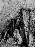 Only sorrow... by thewolfcreek
